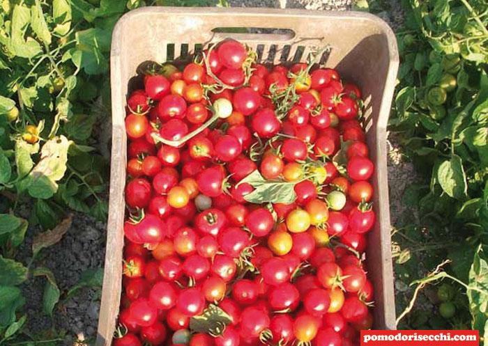 Bruschette con Pomodorini Ciliegini Agriblea (4) - Il
